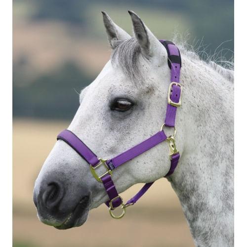 Shires-Topaz-Nylon-Halter---Purple-20683