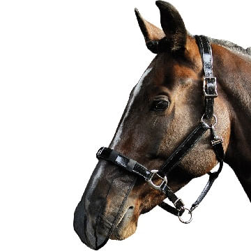 Harry-s-Horse-Nose-Net-71337
