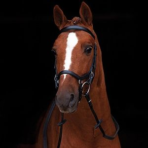 Rambo Micklem Competition Bridle - Black