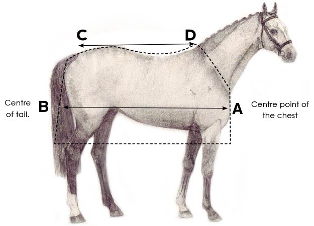 horse-size-how-to-fit-2