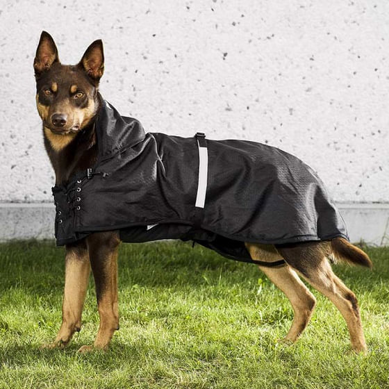 Back-on-Track-Multi-Season-Dog-Coat
