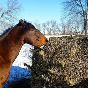 """Handy Hay Nets Small Round Bale Bag 2"""" Holes"""